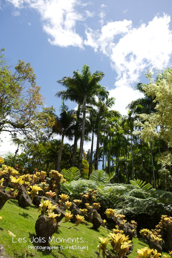 Jardin de Balata Mars 2013 36