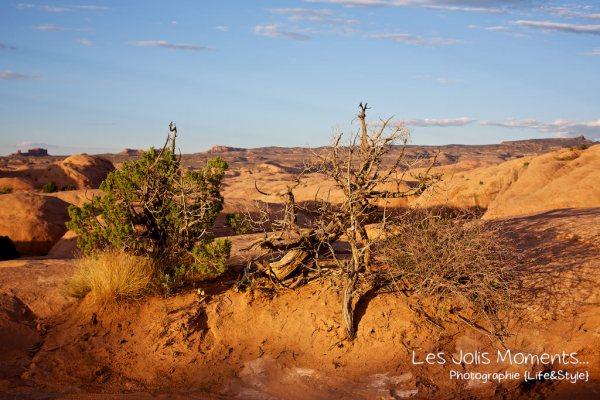 Moab en Hummer 23