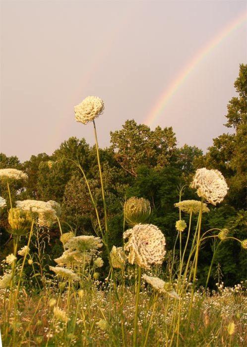 lace&rainbows