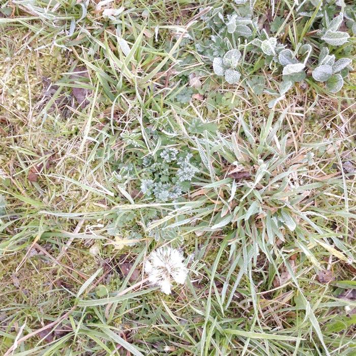 frosty-april-morn