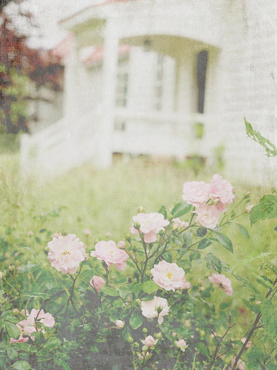pink-roses-front-porch-gauzy