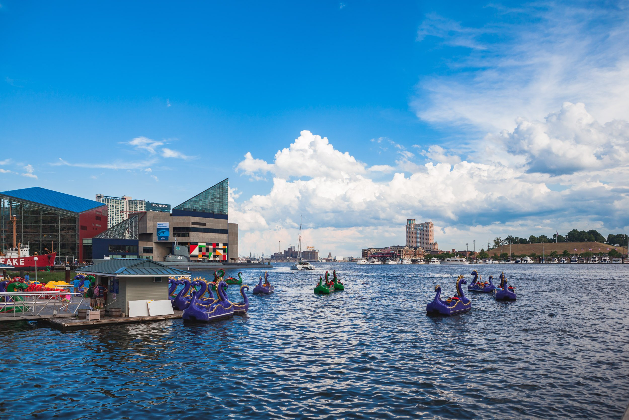 Paddle Boats at Baltimore's Inner Harbor