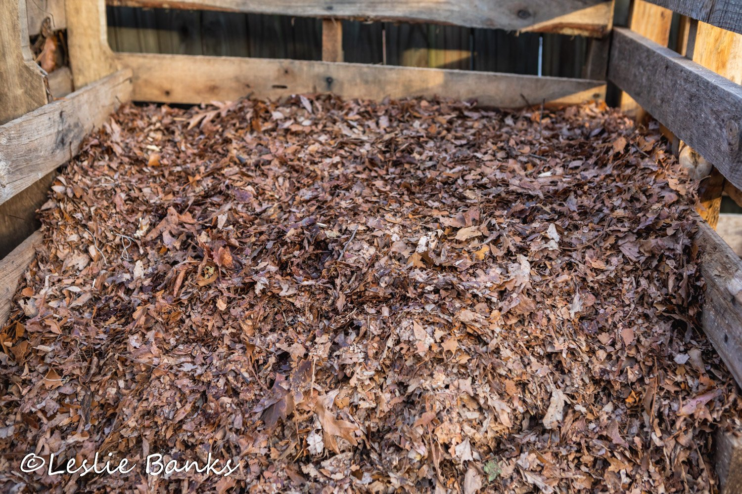 Mulched Leaves