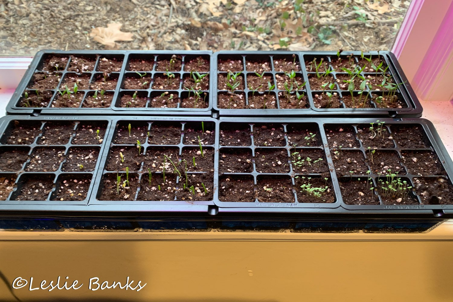 Seedlings Sprouting