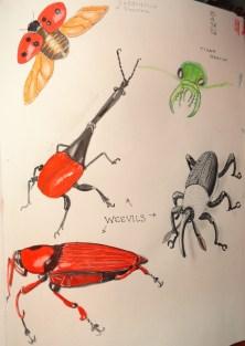 Sketchbook Weevils