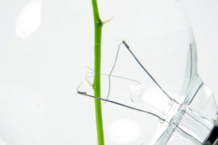 light-bulb-vase-031-2048x1360