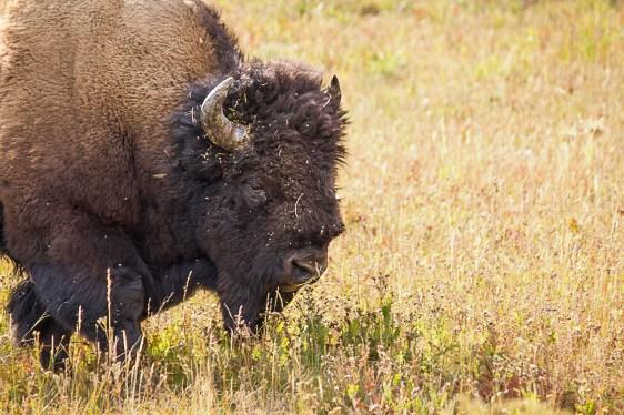Yellowstone-2125