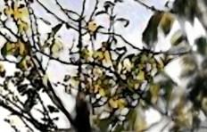 Italian Leaves Close Up Gold
