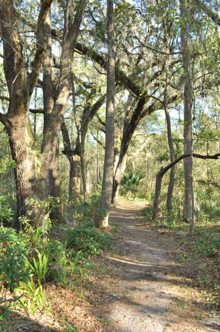 Hogtown Creek Headwaters Nature Parl
