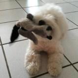 Un chien mignon qui joue
