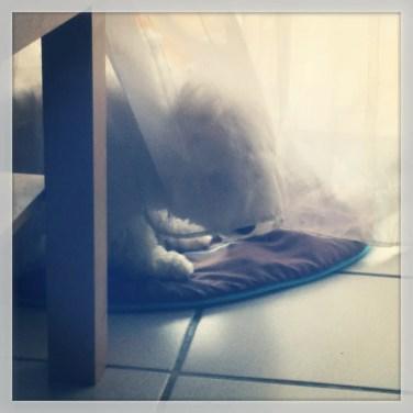 Un chien fantôme...