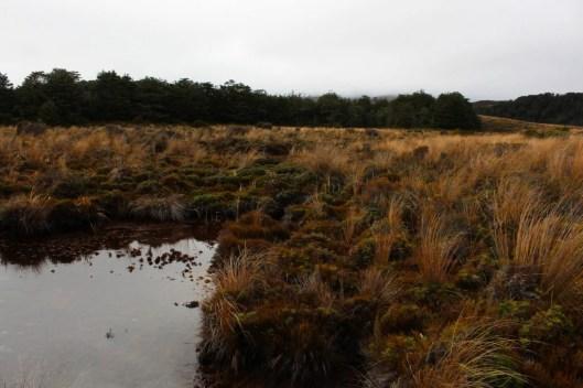 Nouvelle Zélande - Tongariri national parc - Les lubies de louise (3 sur 25)