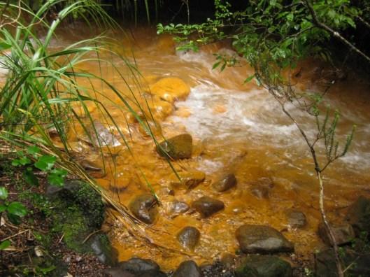 Nouvelle Zélande - Tongariri national parc - Les lubies de louise (4 sur 25)