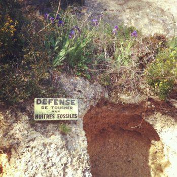 Le mur d'huîtres fossiles de Sainte croix du mont