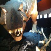 Expo T Rex à Cap science, un peu déçue :(