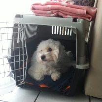 Flora a adopté sa nouvelle cabane