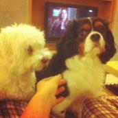 Soirée TV avec mes pots de colle