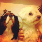 Mes chiens ♥