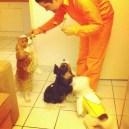 Oui, hannibal lecter donne des sucettes aux chiens... :P