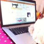 Flora dort sur mon PC...