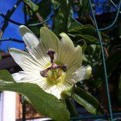 Une jolie fleur et une triste nouvelle...