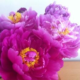 Jolies fleurs ♥