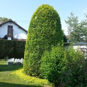 paysagiste jardinier rouen taille