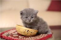Kittens-Part1-2