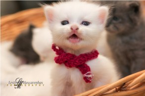 Kittens-Part1-7