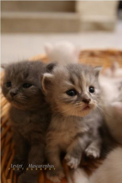Kittens-Part1-9