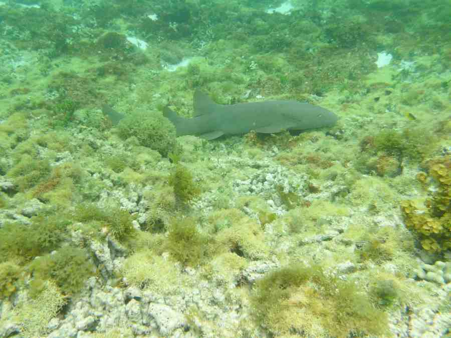 ile-petite terre-guadeloupe-caraibes-snorkeling-requin