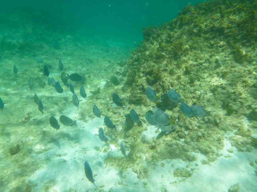 ile-petite terre-guadeloupe-caraibes-snorkeling-poissons
