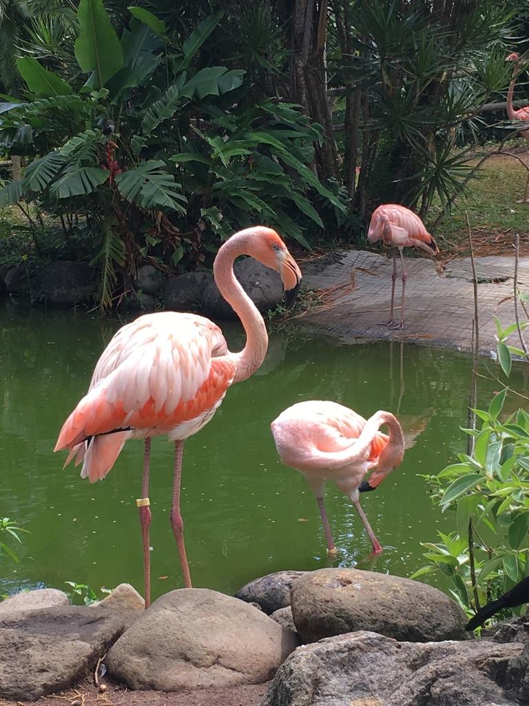 jardin-botanique-nature-fleur-caraibes-guadeloupe-basse terre-vegetation-plan d'eau-flamand rose