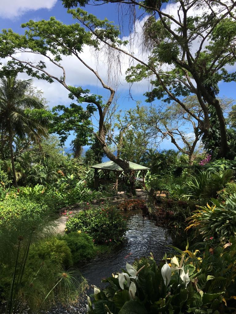 jardin-botanique-nature-fleur-caraibes-guadeloupe-basse terre-arbres