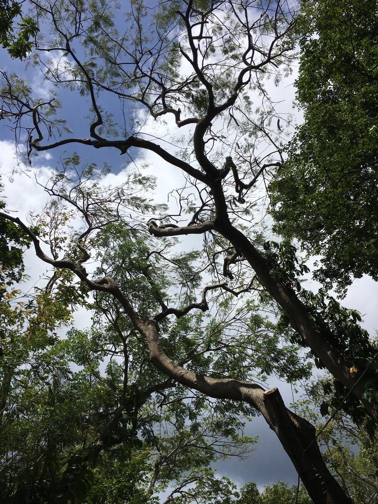 jardin-botanique-nature-fleur-caraibes-guadeloupe-basse terre-arbre