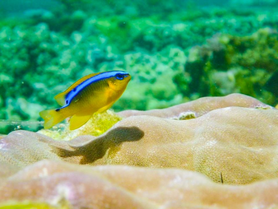 Plongée en polynesie