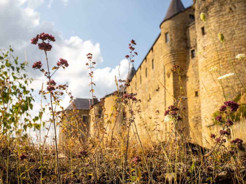 Le château fort de Sedan le plus grand d'Europe