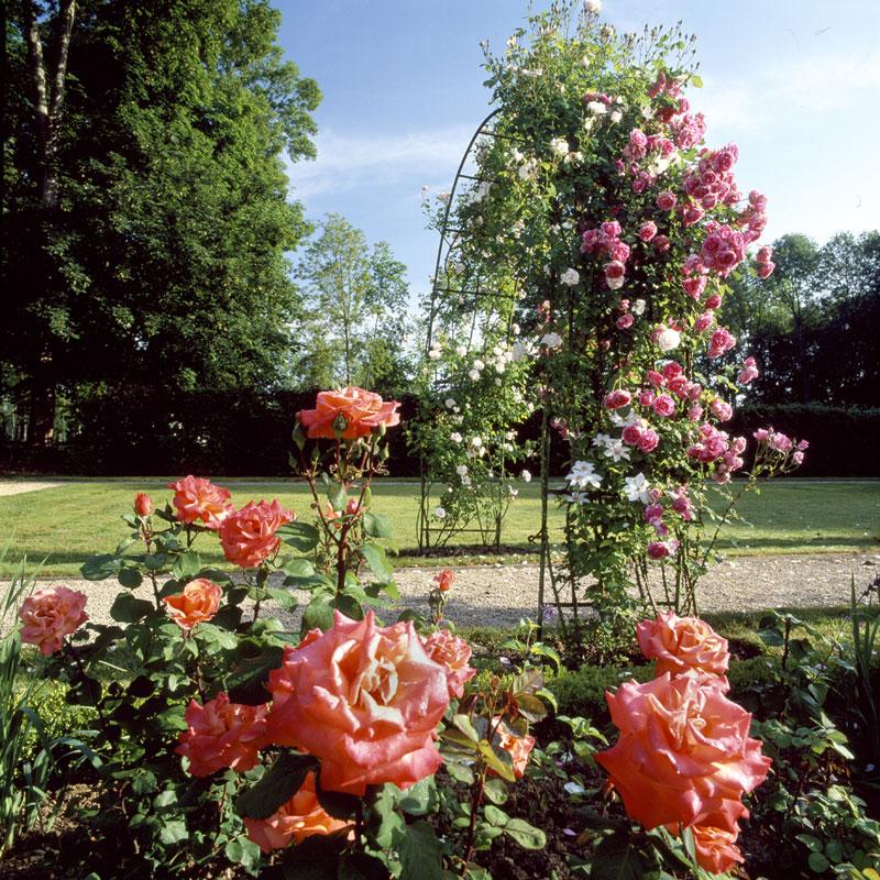 Fête de la rose à Chaalis