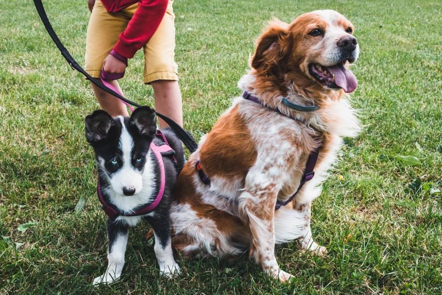 Nos chiens dans un parc