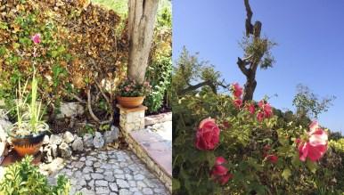 Les Moreres de Sitges. Flores
