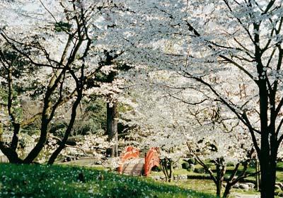 Jardin japonais au musée Albert Kahn