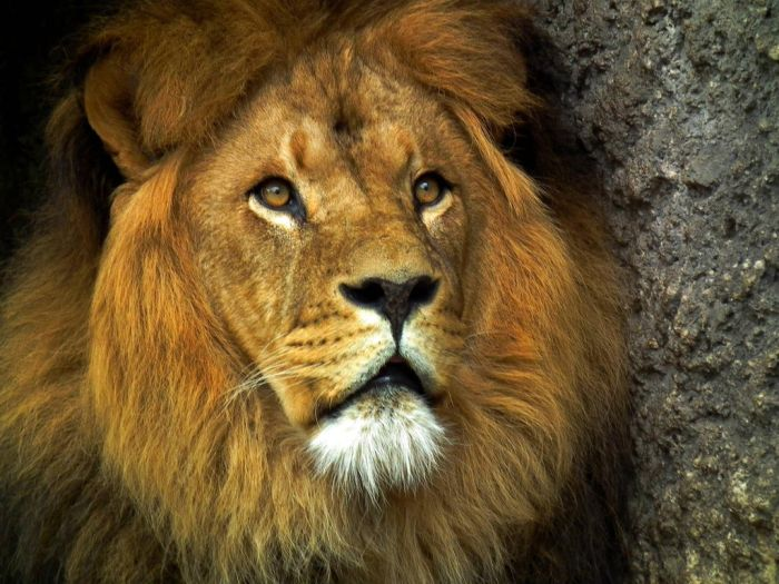 beautiful_animal_pictures_collection_28