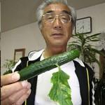 expose-aux-radiations-de-fukushima-ce-concombre-a-une-pousse