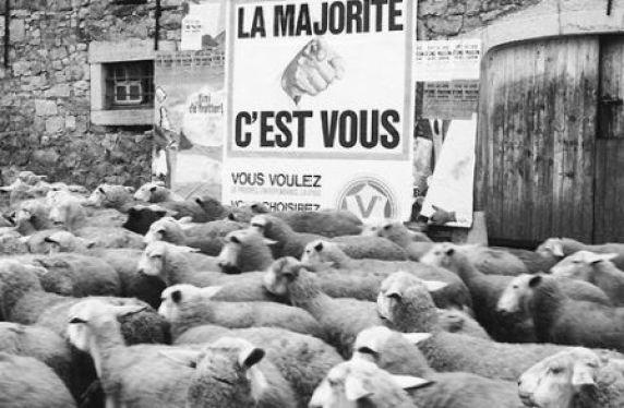 majorité moutons