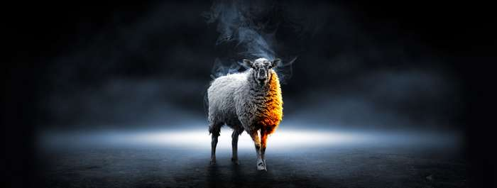 Mouton devant bouger