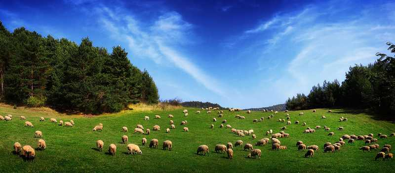 free_sheep_land_wallpaper-407527-1285470821