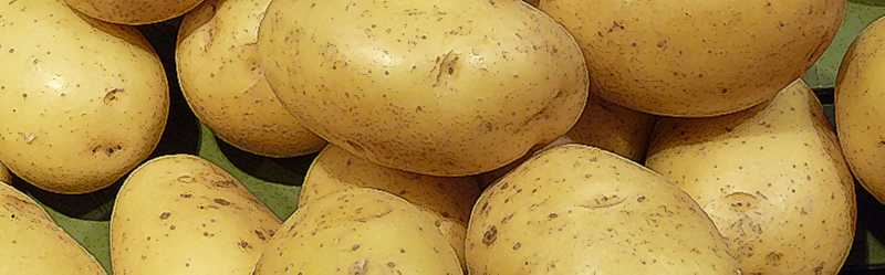 patatesl