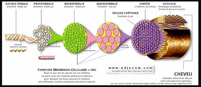 role-des-proteines-masque-protéiné.png