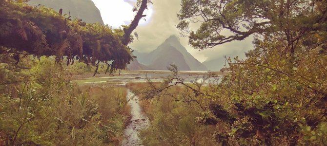 Nouvelle Zélande – île du Sud – Milford sound road