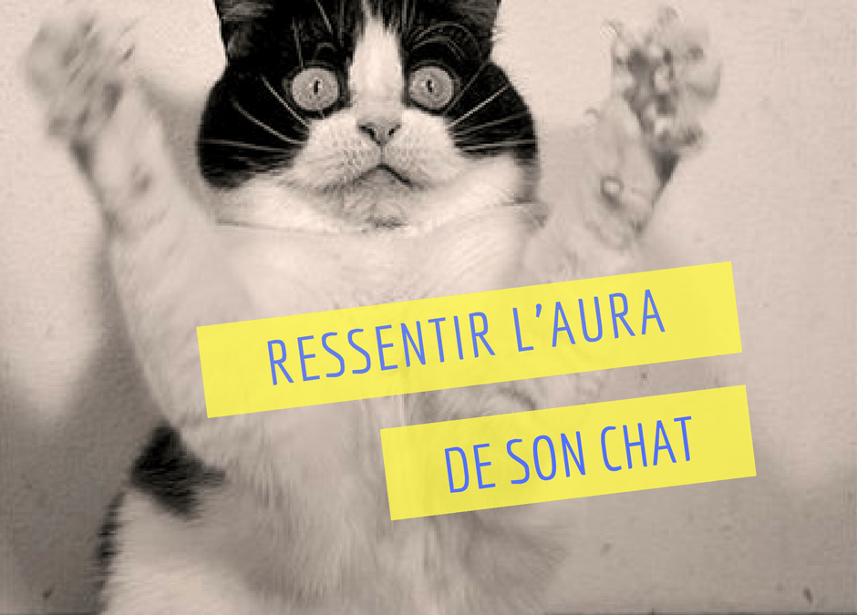 Comment ressentir l'aura de son chat ?